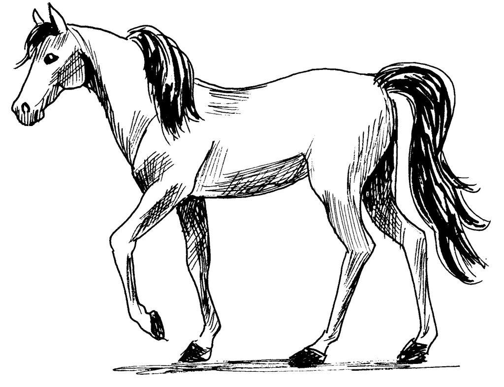 Comment dessiner des animaux la57 montrealeast - Dessiner des animaux ...